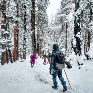 Keadarkantha snow trees